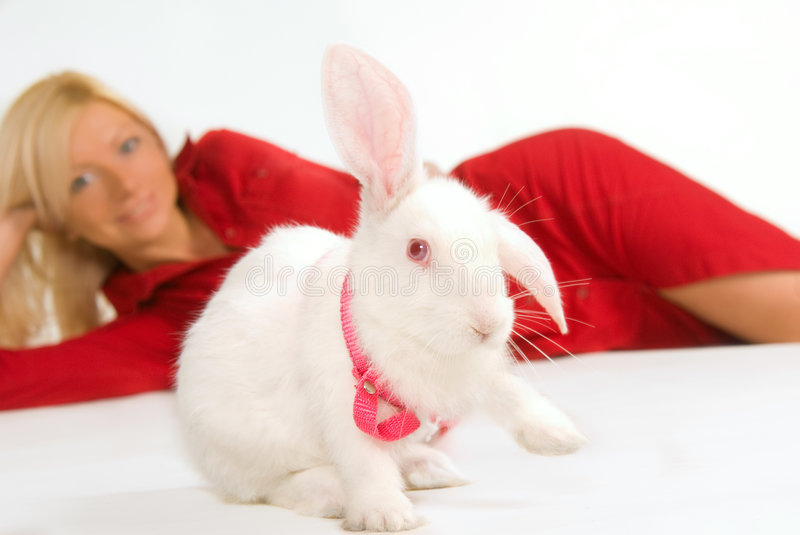 Download Pure white rabbit stock image. Image of blond, caucasian - 6942223