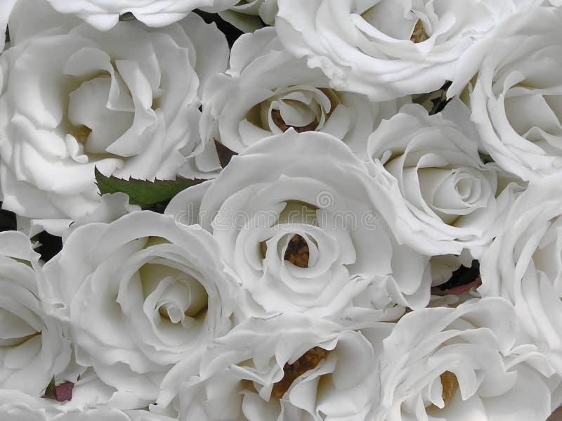 Pure white wedding roses stock photos