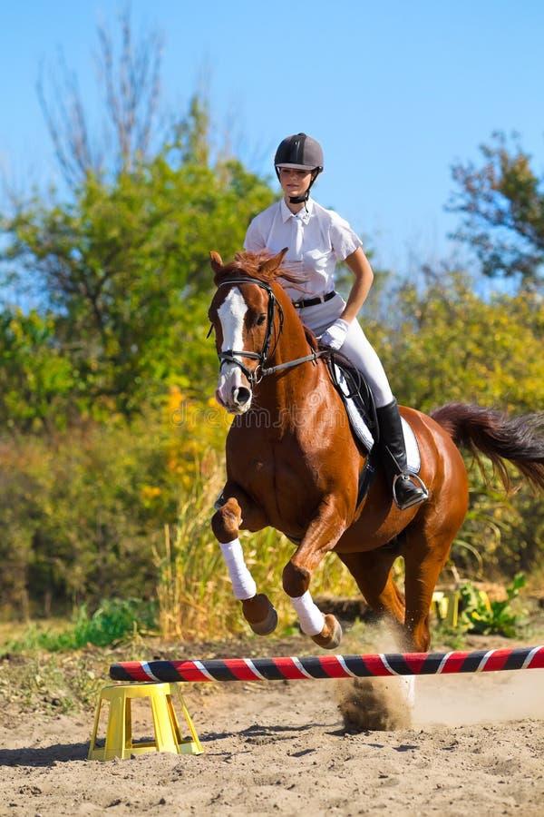 purebred жокея лошади стоковые фото