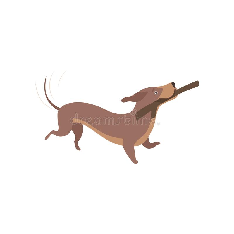 Purebred brown dachshund dog playing with stick vector Illustration on a white background stock illustration