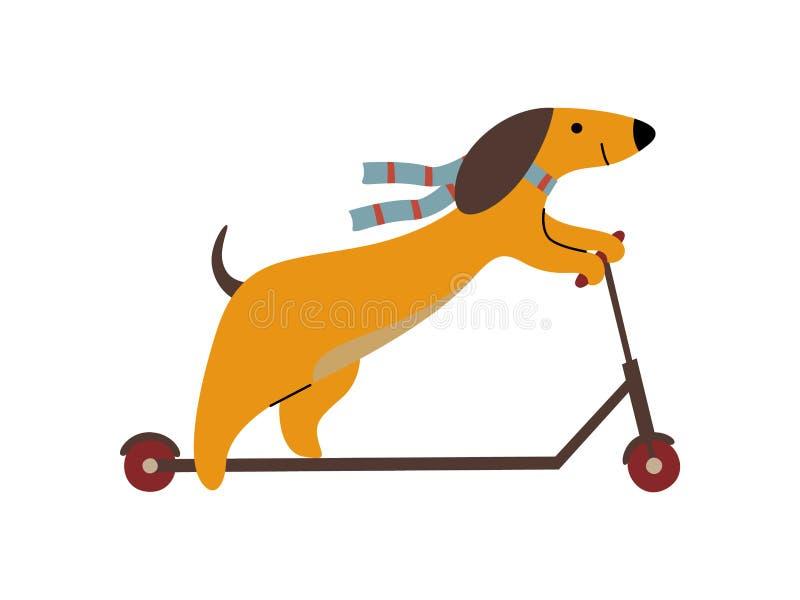 Purebred Brown jamnika psa jazdy kopnięcia hulajnoga, Śmieszna Figlarnie zwierzęcia domowego zwierzęcia postaci z kreskówki wekto royalty ilustracja