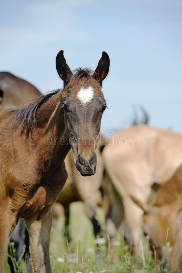 Download Purebred foal stock photo. Image of outdoors, horse, farm - 25627102