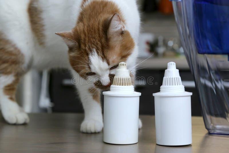 Purification d'eau potable à la maison Le chat renifle des filtres pour la purification d'eau photographie stock
