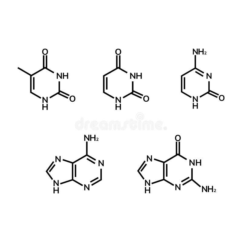 Purine- och pyrimidinenucleobases stock illustrationer