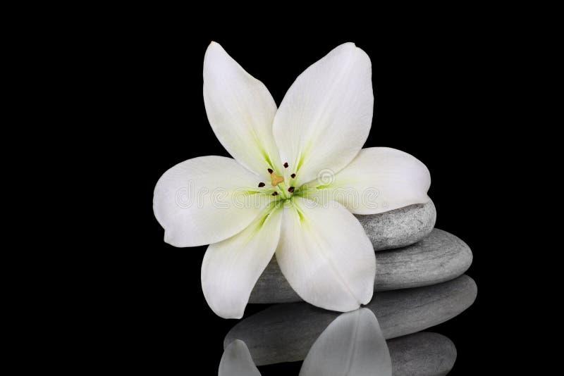 Download Purity stock image. Image of petal, flower, beautiful - 18689491