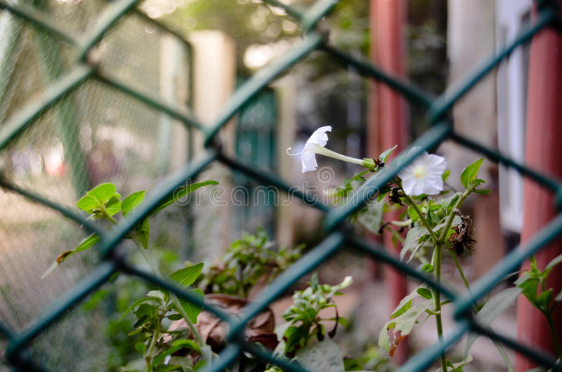 Purity in Cage royalty free stock photos