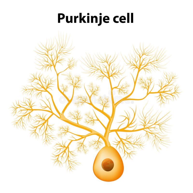 Purkinje cell eller Purkinje neuron stock illustrationer