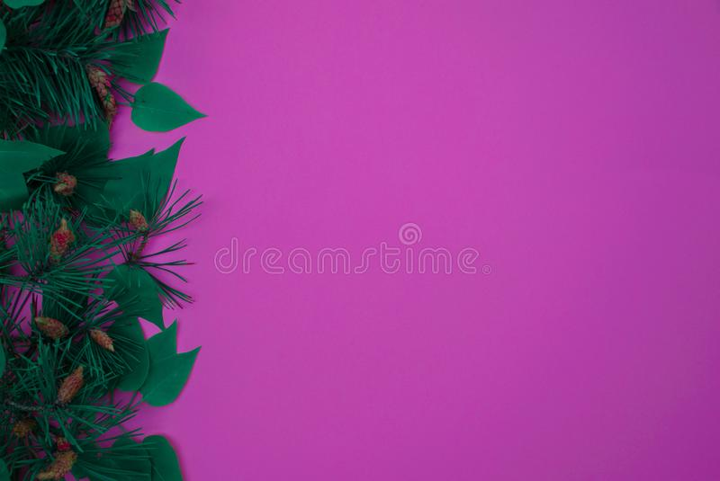 Holiday photo, Christmas tree branches from left to right, space for text and advertising royalty free stock photos