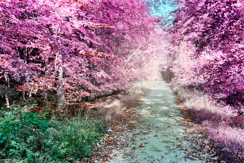 Purper infrarood boslandschap royalty-vrije stock foto