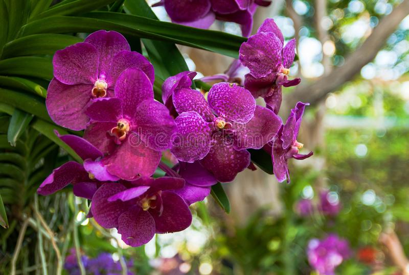 Purper orchideeboeket stock fotografie