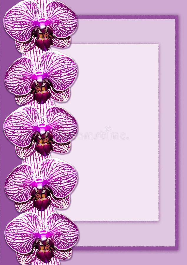 Purper orchideekader vector illustratie