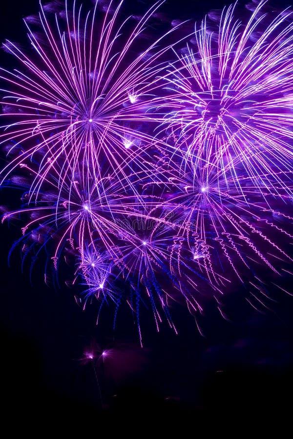 Purper vuurwerk stock afbeelding