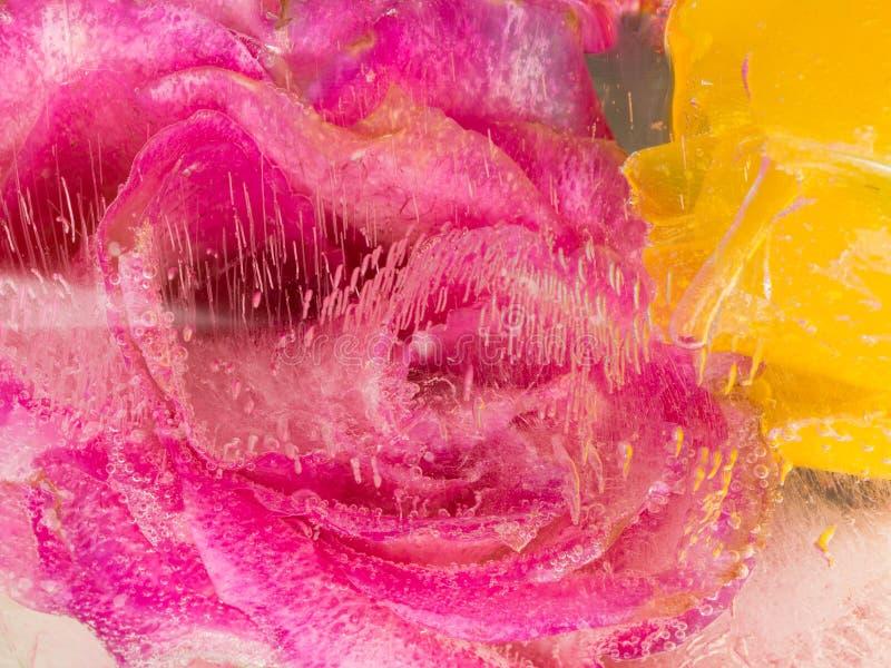 Purpere aromatische organische abstractie royalty-vrije stock foto