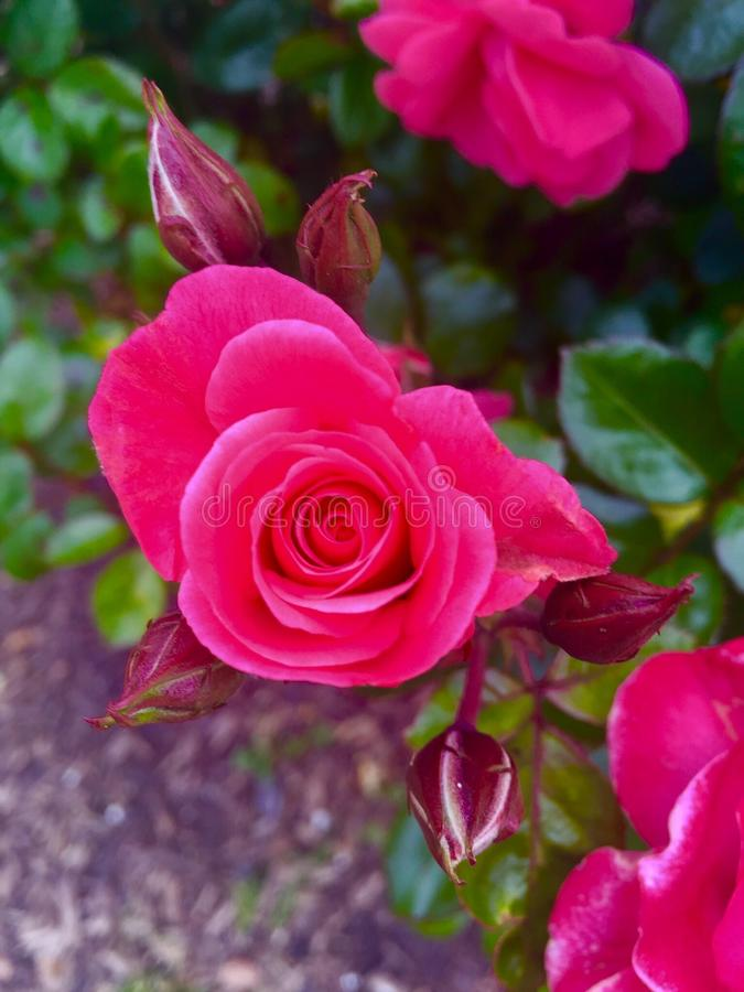 Purpere bloem royalty-vrije stock fotografie