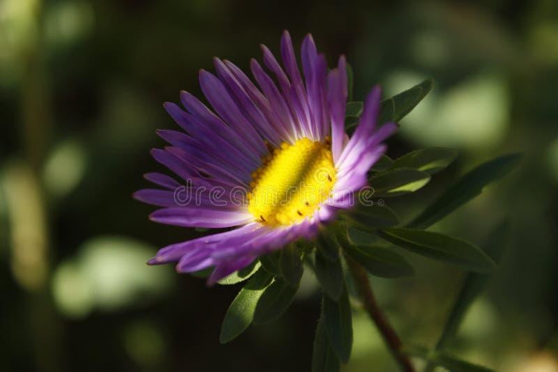 Purpere bloem in de schaduw royalty-vrije stock afbeeldingen