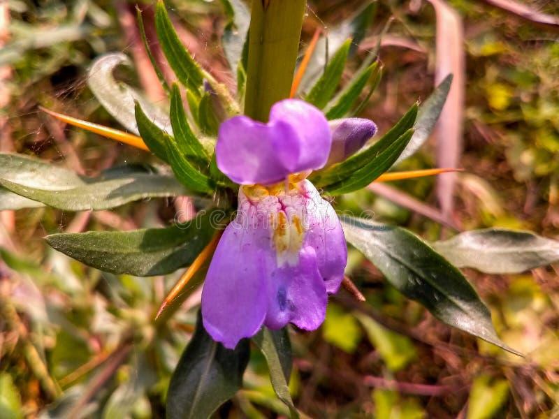 Purpere bloem in een weg royalty-vrije stock foto