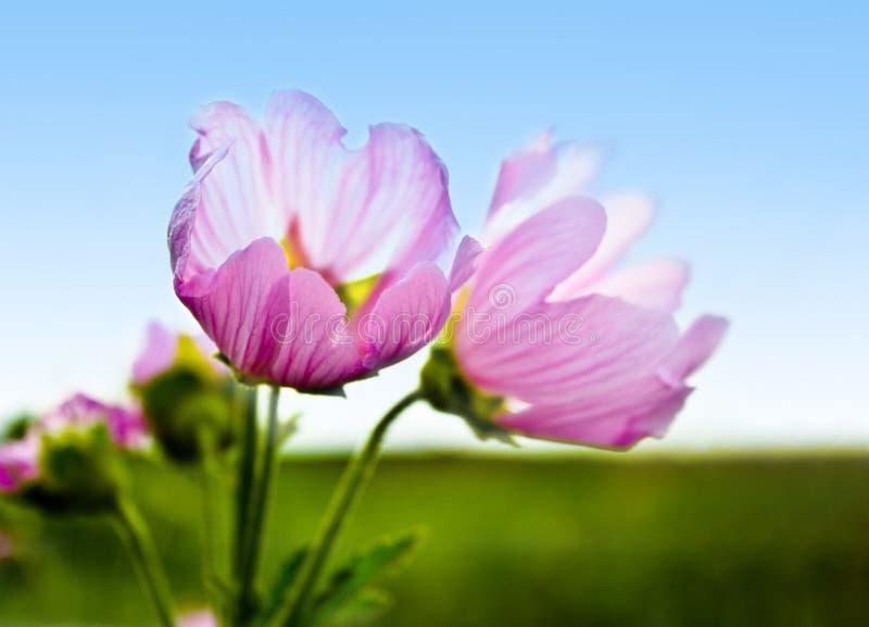 Purpere bloem en blauwe hemel royalty-vrije stock foto's
