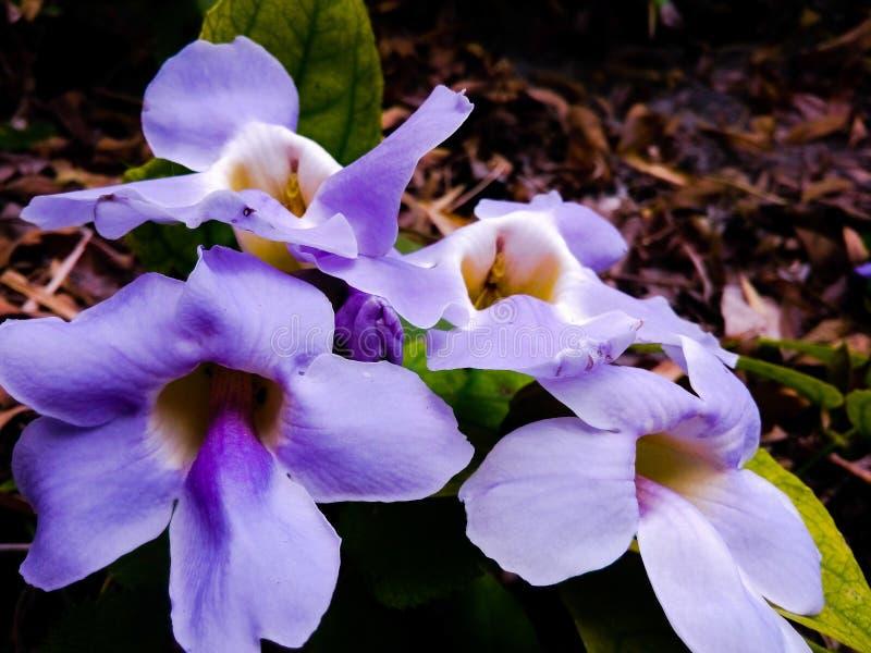 Purpere bloem en brow achtergrond royalty-vrije stock afbeeldingen