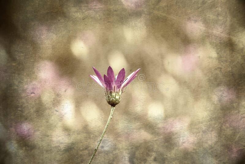 Purpere Bloem (grunge beeld) stock fotografie