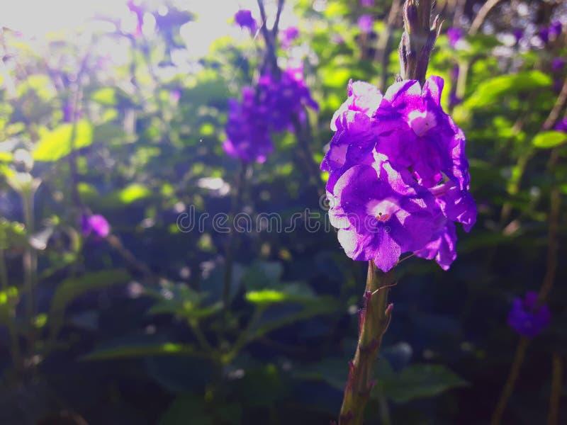 Purpere bloem op een aar stock foto