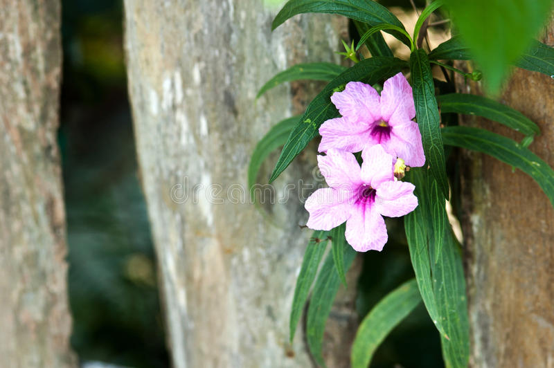 purpere bloem op houten achtergrond royalty-vrije stock afbeeldingen