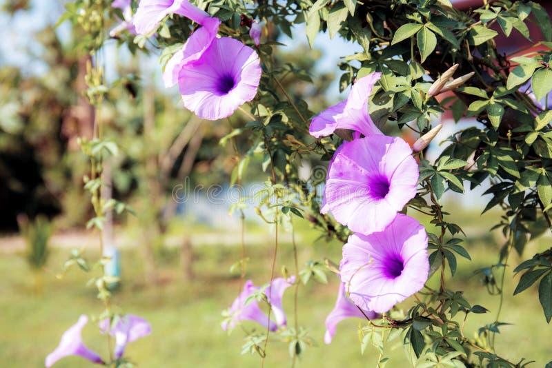 Purpere bloem op omheining in park royalty-vrije stock foto