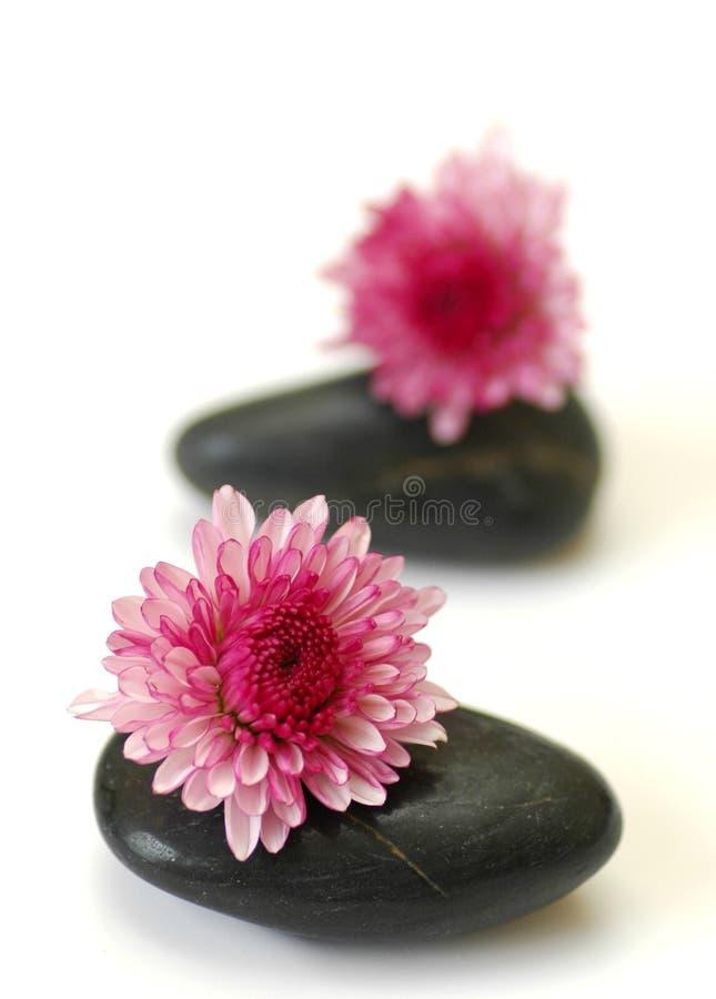 Purpere bloem op steen royalty-vrije stock foto