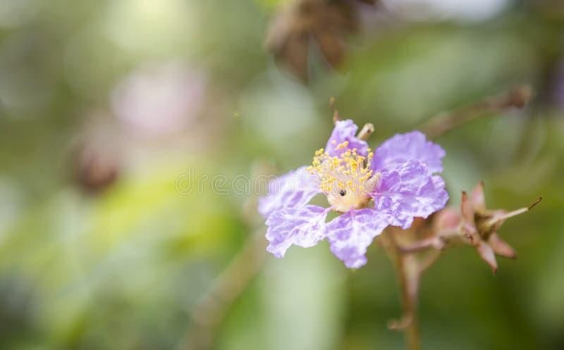 Purpere bloem over vage achtergrond stock afbeelding