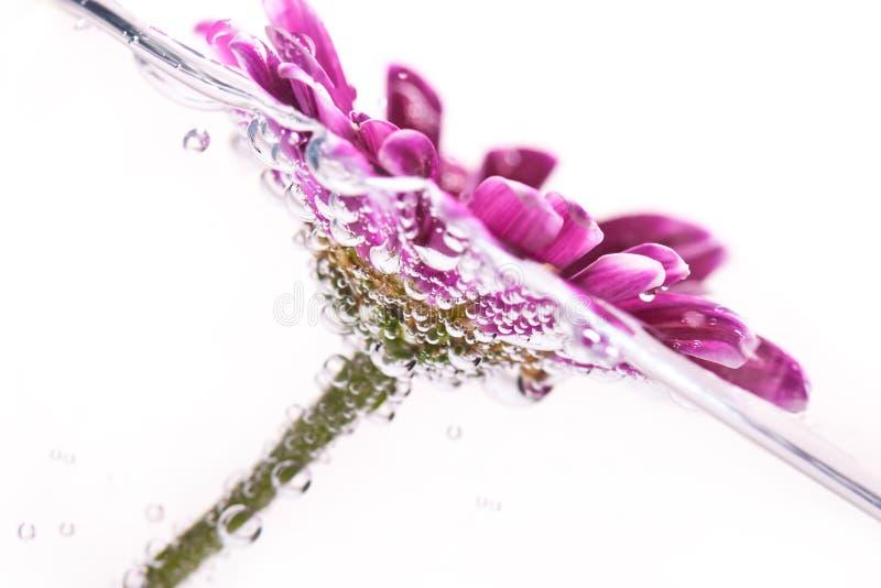 Purpere bloem in water stock afbeeldingen