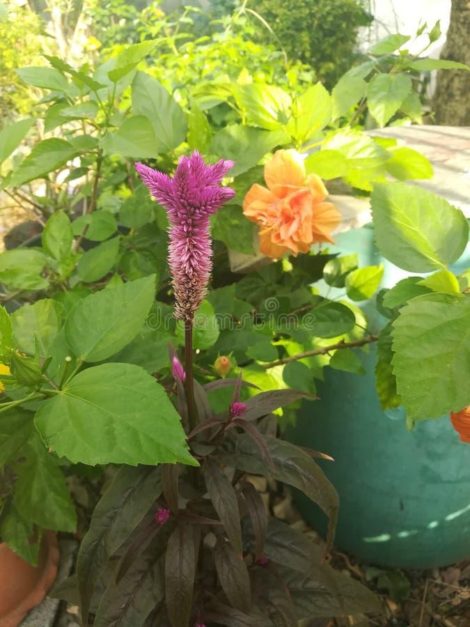 Purpere bloemboeketten in de tuin royalty-vrije stock afbeeldingen