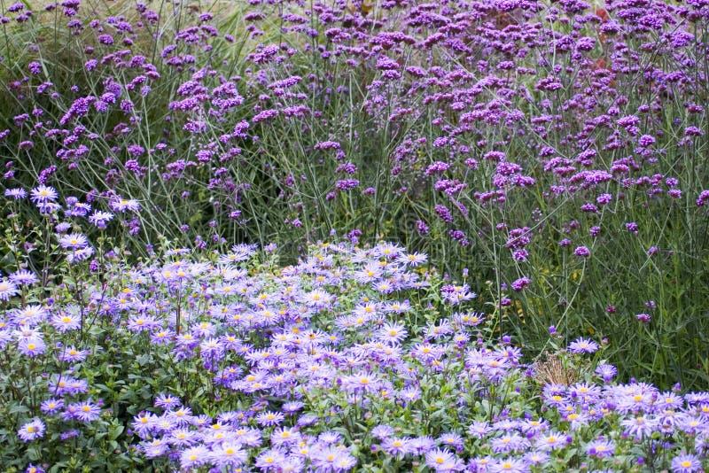Download Purpere bloemen stock afbeelding. Afbeelding bestaande uit summer - 285271