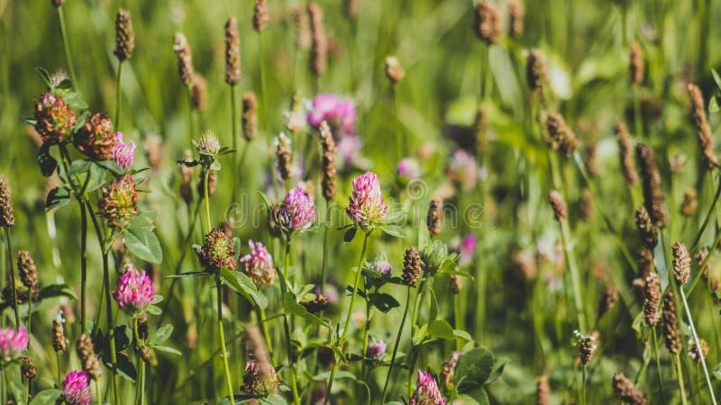 Purpere bloemen binnen lang groen gras royalty-vrije stock afbeelding
