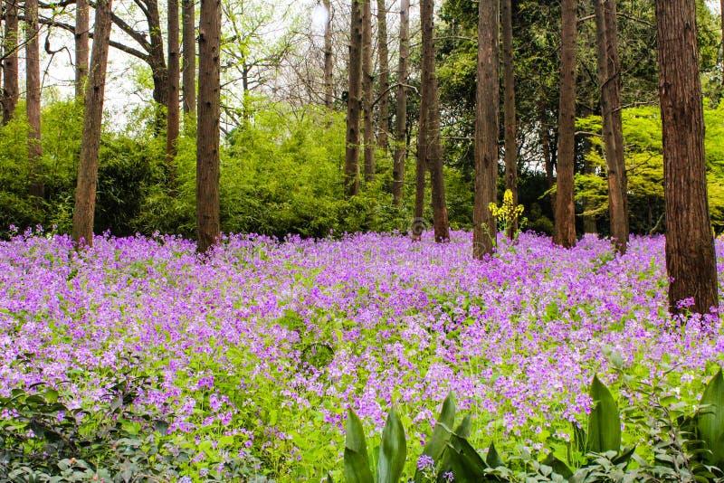 purpere bloemen in het bos royalty-vrije stock foto's