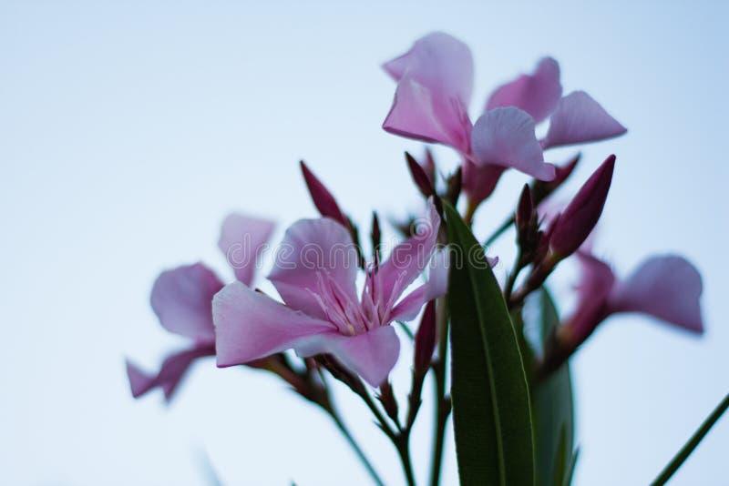 Purpere bloemen met hemel op achtergrond stock fotografie