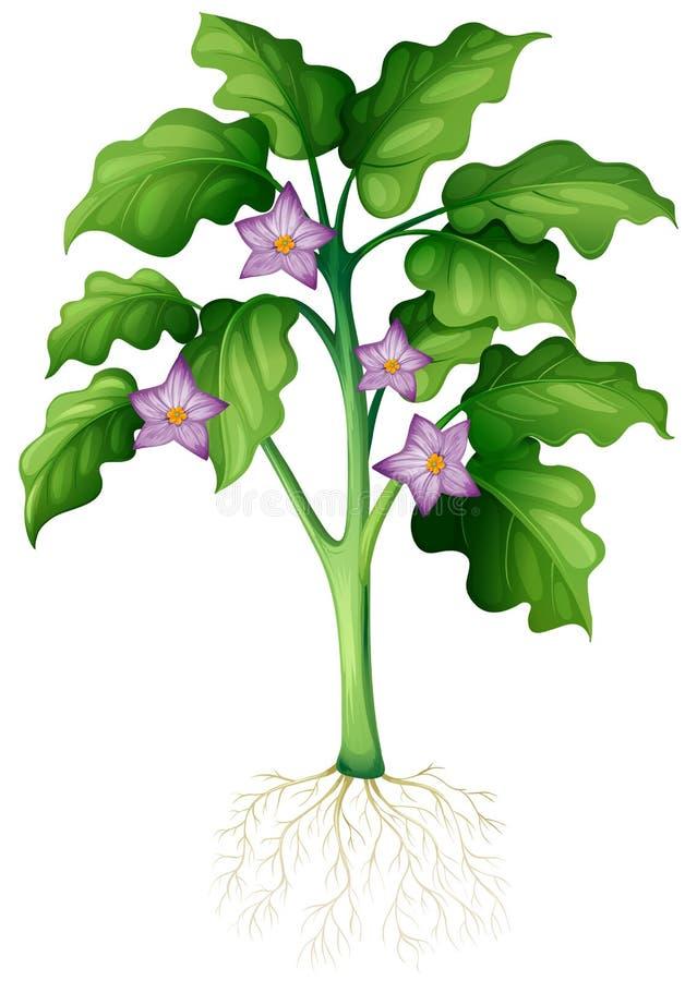 Purpere bloemen op de installatie royalty-vrije illustratie
