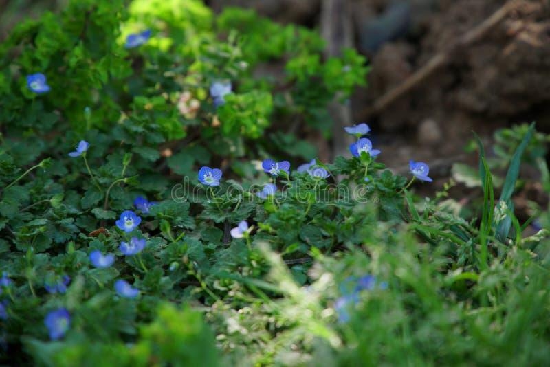 Purpere bloemen op gras stock afbeelding