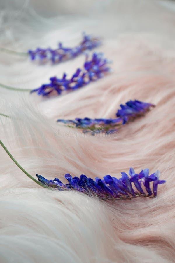 Purpere bloemen op het witte bont van de hond stock foto's