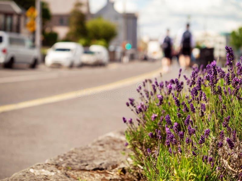 Purpere bloemen in stad, de abstracte achtergrond van het stadsleven, selectieve nadruk Sluit omhoog Mensen die op de achtergrond royalty-vrije stock foto