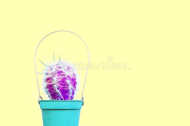 Purpere Cactus stock afbeelding