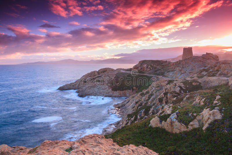 Purpere dageraad, Ile Rousse, Corsica stock afbeeldingen