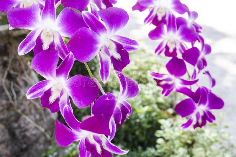 Purpere de aardclose-up van de orchideebloem stock foto