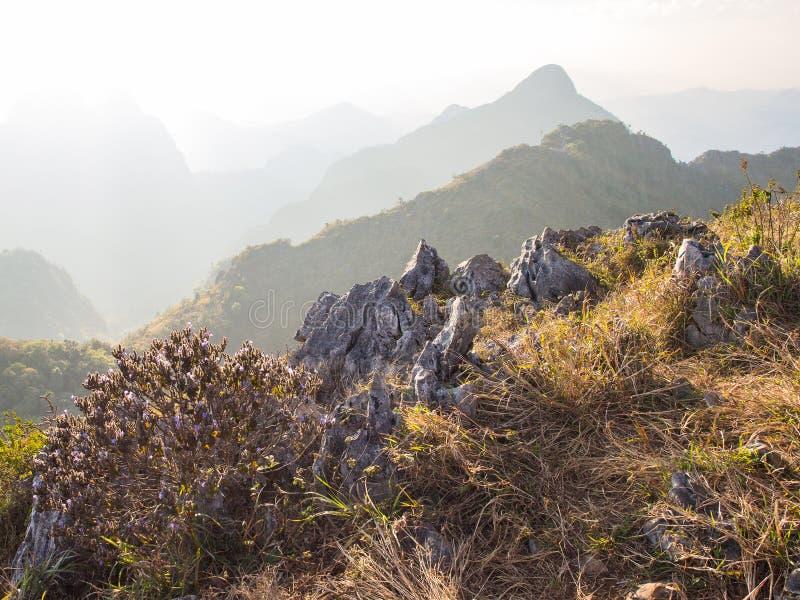 Purpere die bloemstruik en het kalksteen met de droge weide op de bergpiek wordt omringd stock afbeeldingen