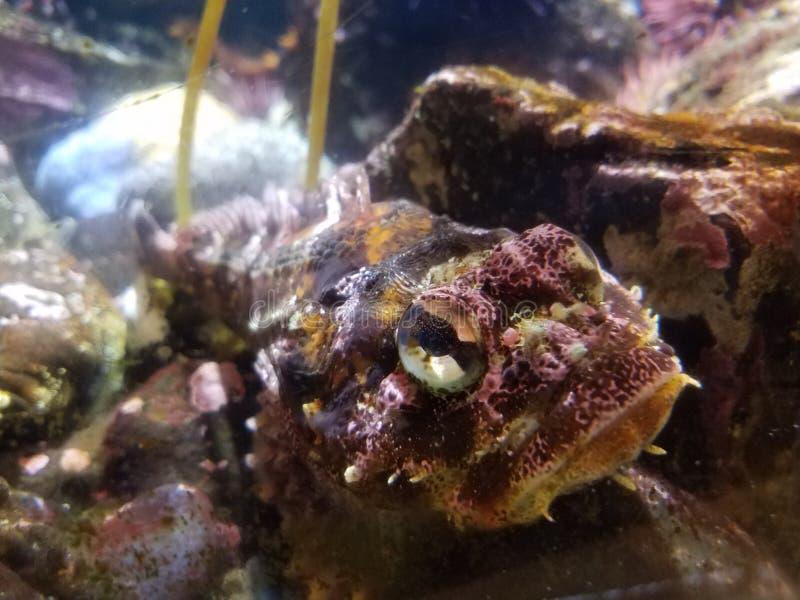 Purpere en gele vissen in aquarium of de oceaan stock afbeeldingen