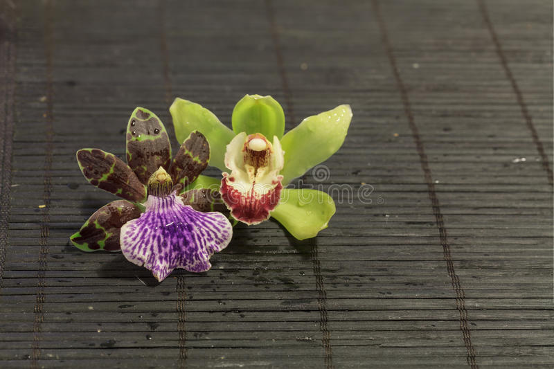 Purpere en groene Orchidee stock afbeeldingen