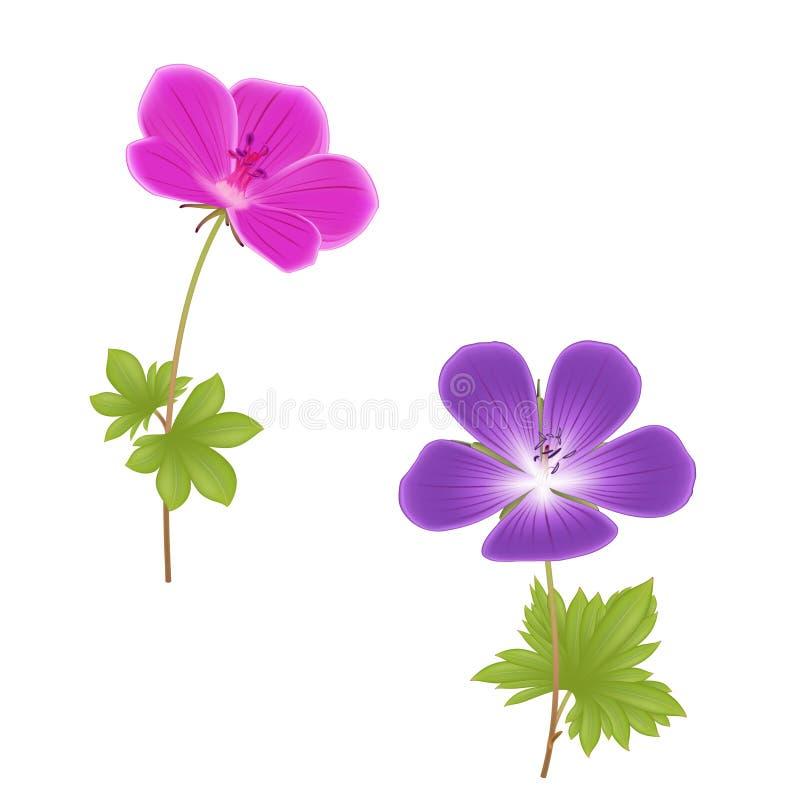 Purpere en roze geraniumbloemen royalty-vrije illustratie