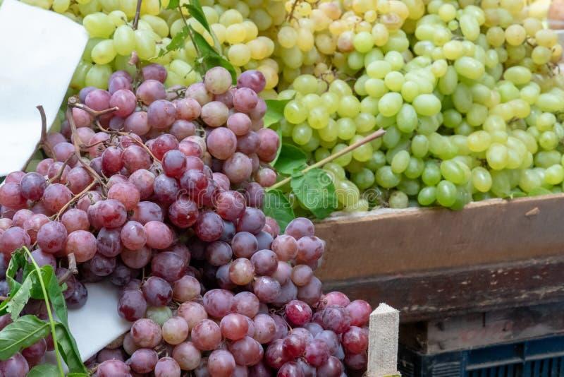 Purpere en witte druif stock afbeelding