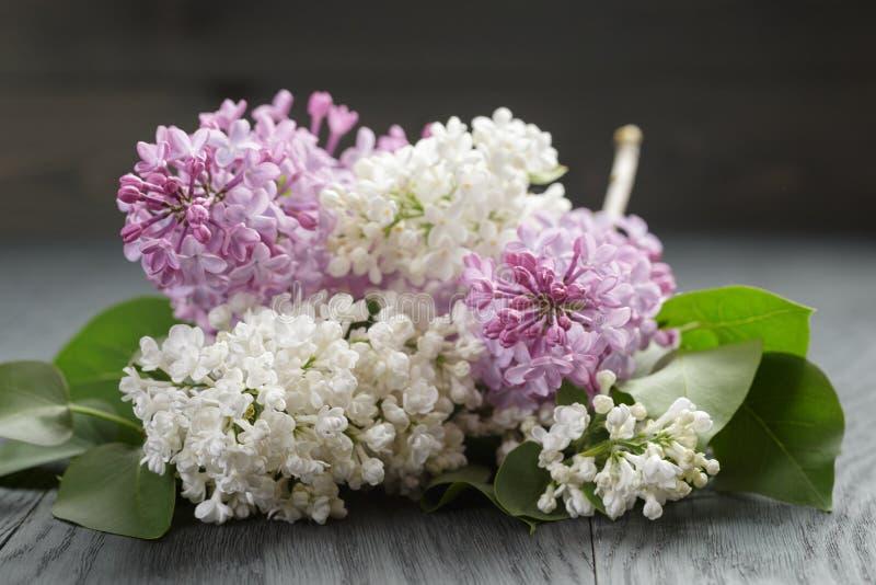 Purpere en witte lilac bloem op oude eiken lijst stock fotografie