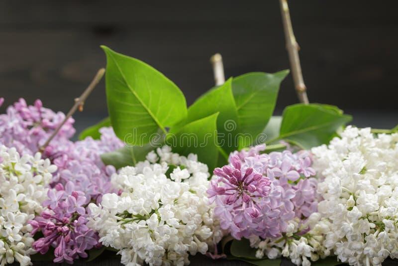 Purpere en witte lilac bloem op oude eiken lijst stock foto's