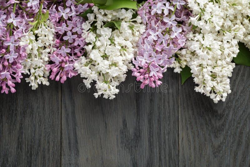 Purpere en witte lilac bloem op oude eiken lijstbovenkant stock afbeelding