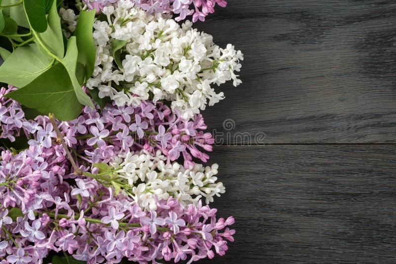 Purpere en witte lilac bloem op oude eiken lijstbovenkant stock afbeeldingen